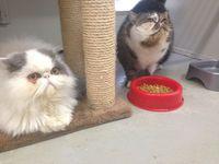 Winston & Juliet