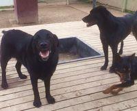 Yinyo, Turbo & Missy